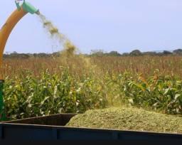 Vendo silagem de milho