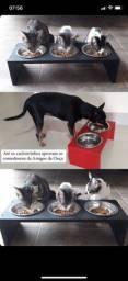 Comedouros elevados para gatos