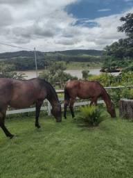 Égua e potra