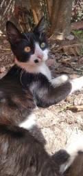 Doação gato aproximadamente 3 meses macho