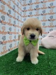 Filhotes de Golden é no Da Madre Pet Shop