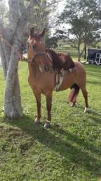Égua Gateada Rosilha