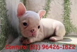 Bulldog Frânces parcelo no cartão até 12x e entrego. (vacinados e com pedigree).