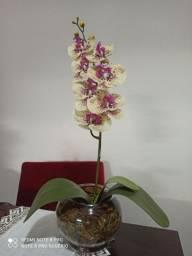 Arranjo com orquídeas para decoração.
