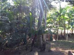 Chácara com 2 dormitórios à venda, 8000 m² por R$ 85.000,00 - Rio Sagrado - Morretes/PR
