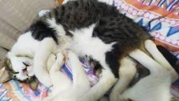 Doação de dois gatinhos machos