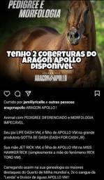 Aragon Apollo