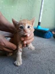 Vendo lindos gatinho de olhos azuis