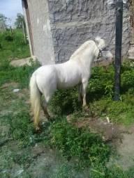 Linda poney
