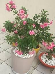 Plantas de Jardim