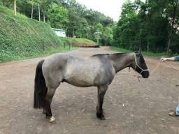 Cavalo lobuno