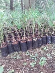 Plantas de zonas de merejo
