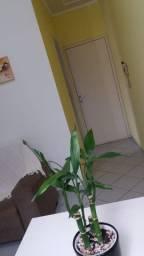 Alugo qto em apartamento no bairro chácara cahoeira