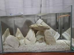 Dois aquários 100 e 50 litros