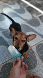 Hospedagem e creche/day care para cães