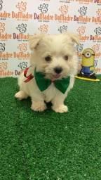 Filhote Maltês é no Da Madre Pet Shop