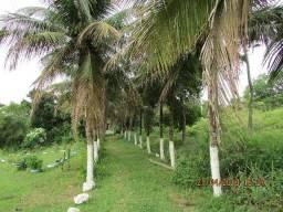 Sítio a 250 metros da Dutra, 12 mil m², 2 casas, fruteiras, lago de peixes