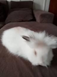 Oferta de mini coelho
