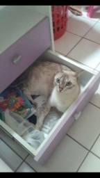 Doação responsável de gatinha