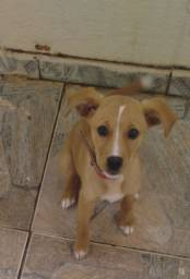 Doa-se cachorro Srd  urgente