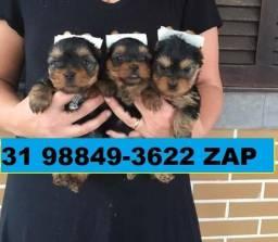 Canil Filhotes Top Cães BH Yorkshire Poodle Beagle Spitz Shihtzu Bulldog Lhasa