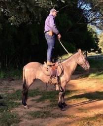 Doma, treinamento e hospedagem equinos