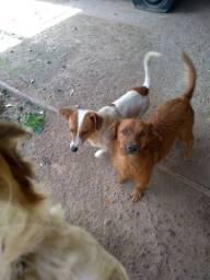 Doa se 3 cães