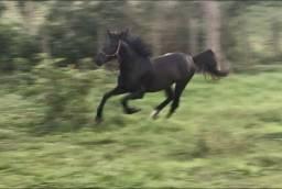Cavalo Poutro