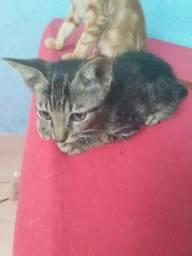 3 gatinhos - 2 Machos 1 Fêmea