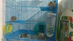 5 hamster sírio