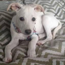 Doa se lindo cachorrinho castrado, vacinado - Mooca SP