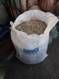 Semente de abóbora seca tá estalando