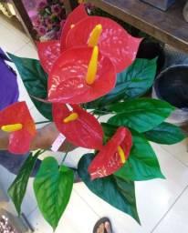 Planta Antúrio ( Envio Para Sua Residência )
