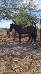 Cavalo bom e barato