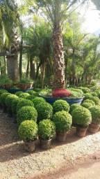 Serviços De Jardinagens E Limpeza De Vidros