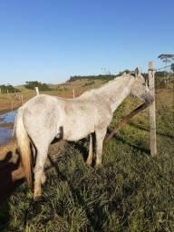 Égua cavalo