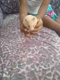 Estou doando dois hamster sério bem saudável