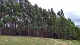 Eucalipto região de Carrancas, Cruzília, Minduri, Luminárias, São Vicente etc