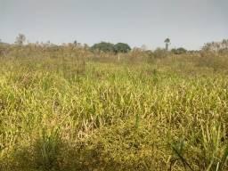 Chácara 1,3 ha cinturão verde