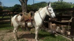 Vendo ou troco mula