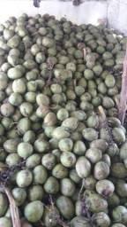 Coco verde de caruaru