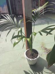 Plantas para enfeitar seu jardim.