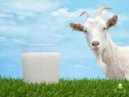 Vendo Leite de Cabra