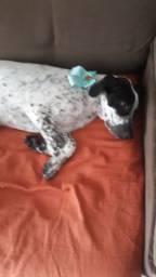 Doacao de cachorra de 4 meses
