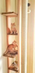 Casas, Camas, e arranhadores de qualidade para seus felinos