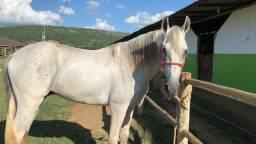 cavalo Manga Larga Sem registro