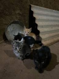 Gatinhos para adoção!!
