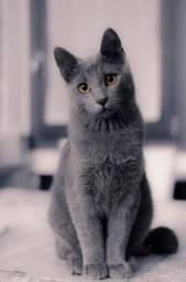 Gato filhote CINZA!