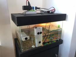 Aquaterrario com móvel