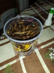 2 litros de tanajura